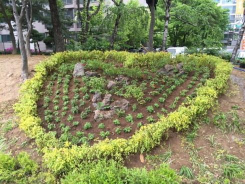 """성남시 """"나무 심을 숨은 땅 찾아요"""""""